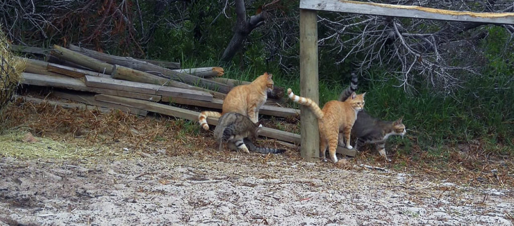 Feral Cat webbanner